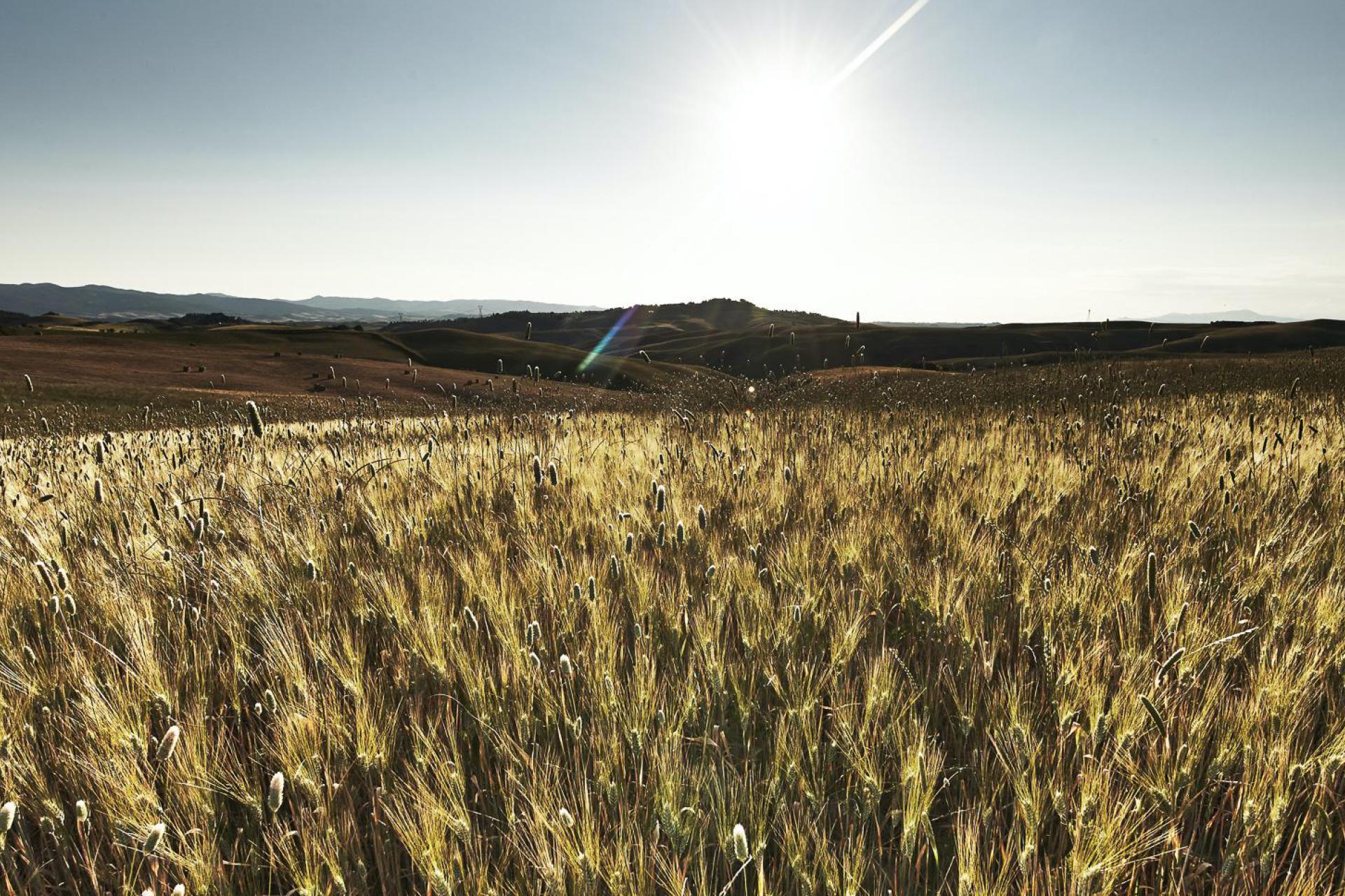 Agriturismo Apulien Agriturismo Puglia mit einzigartigem Design-Interieur