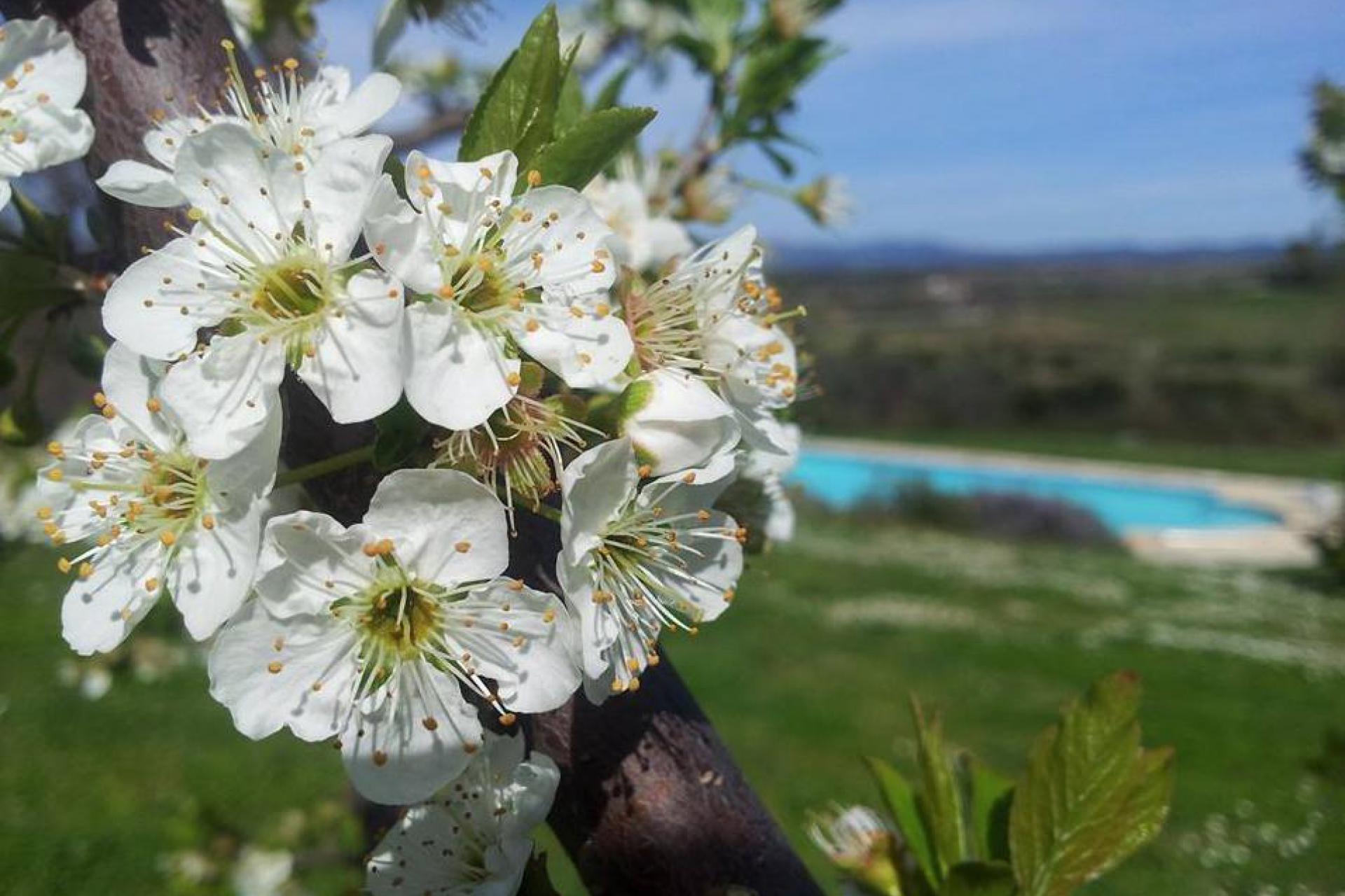 Agriturismo Toskana Agriturismo Toskana, Olivenhain und fantastischer Blick